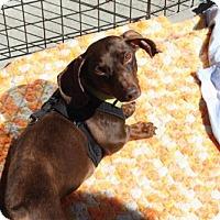 Adopt A Pet :: Grant - Aurora, CO
