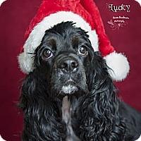 Adopt A Pet :: Lucky - Rancho Mirage, CA