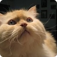 Adopt A Pet :: Titus - Beverly Hills, CA