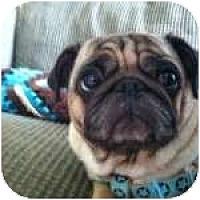 Adopt A Pet :: Larry - Windermere, FL
