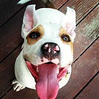 Adopt A Pet :: Banjo - Richmond, CA