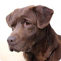 Adopt A Pet :: Kona - Petaluma, CA