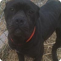 Adopt A Pet :: SUNNY - Oswego, IL