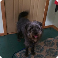 Adopt A Pet :: Chip - Antioch, IL