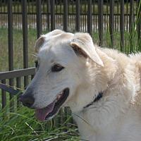 Adopt A Pet :: Finn - Myakka City, FL
