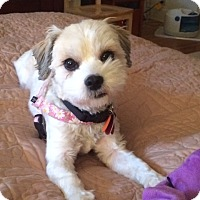 Adopt A Pet :: CANDY-pending - Eden Prairie, MN