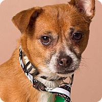 Adopt A Pet :: Patton - Gilbert, AZ