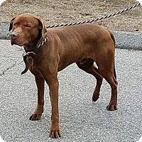 Adopt A Pet :: Chomper - Yorktown, VA