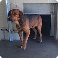 Adopt A Pet :: Hobo - Jacksonville, TX