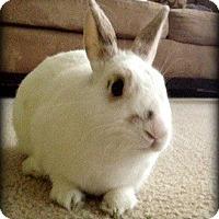Adopt A Pet :: Mason - Williston, FL