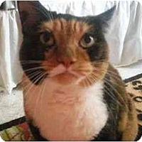 Adopt A Pet :: Cinnamon - Summerville, SC
