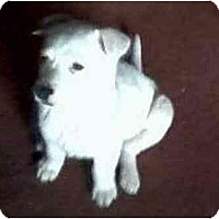 Adopt A Pet :: Alpine Ice - Scottsdale, AZ