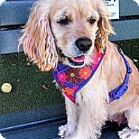Adopt A Pet :: Buffy - Encinitas, CA