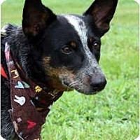 Adopt A Pet :: Rebel - Siler City, NC