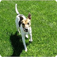 Adopt A Pet :: HAPPY JACK - Scottsdale, AZ