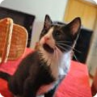 Adopt A Pet :: Cuddy - Port Republic, MD