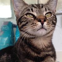 Adopt A Pet :: Jasmine - Miami, FL