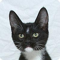 Adopt A Pet :: Stretch M - Sacramento, CA