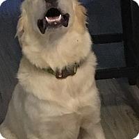 Adopt A Pet :: Detective Woof *Adopted - Tulsa, OK
