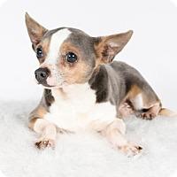 Adopt A Pet :: Taco - St. Louis Park, MN