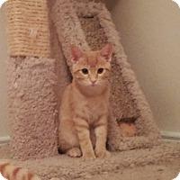 Adopt A Pet :: Sam - Arlington/Ft Worth, TX
