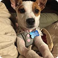 Adopt A Pet :: SaraMarie - Alpharetta, GA