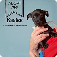 Adopt A Pet :: Kaylee - Pearland, TX