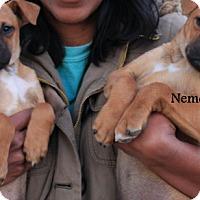 Adopt A Pet :: Nemo and Dory - Allentown, NJ