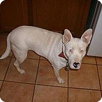 Adopt A Pet :: Helen - Rayville, LA