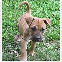 Adopt A Pet :: Cole - Santa Monica, CA