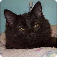 Adopt A Pet :: Banshee - Lakeland, FL