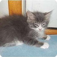 Adopt A Pet :: Grande - Acme, PA