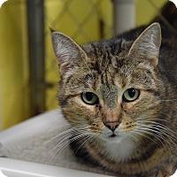 Adopt A Pet :: Cinderella - Pottsville, PA