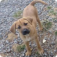 Adopt A Pet :: Black Female - Westminster, MD