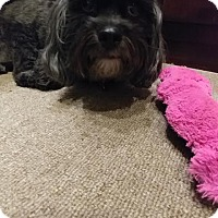 Adopt A Pet :: Chinney - Las Vegas, NV
