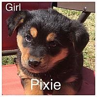 Adopt A Pet :: Pixie - Oxford, CT