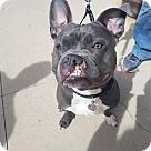 Adopt A Pet :: Bronson - ADOPTION PENDING