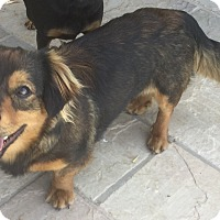 Adopt A Pet :: Hershey - Phoenix, AZ