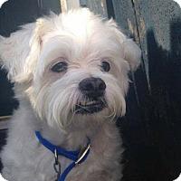 Adopt A Pet :: Sebastian - Coldwater, MI