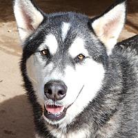 Adopt A Pet :: Kyra - Sugar Land, TX