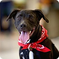 Adopt A Pet :: Dash - Dallas, TX
