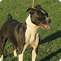 Adopt A Pet :: Rachael - Greenville, RI