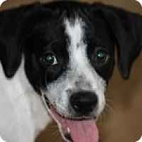 Adopt A Pet :: Kiwi - Madison, WI