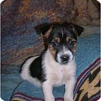 Adopt A Pet :: Skotty - Glastonbury, CT