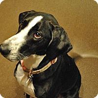 Adopt A Pet :: Paris - Louisville, KY
