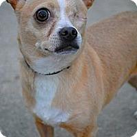 Adopt A Pet :: Speck - Orlando, FL