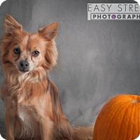 Adopt A Pet :: Francisco - Crawfordville, FL
