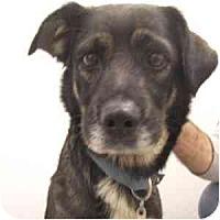 Adopt A Pet :: Hazel - Phoenix, AZ