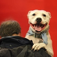 Pit Bull Terrier Mix Dog for adoption in Silver Spring, Maryland - Minnie