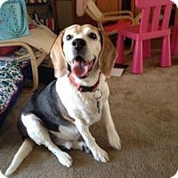 Adopt A Pet :: Rootbeer - Phoenix, AZ